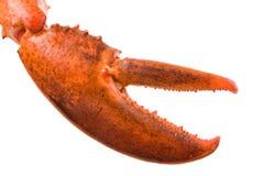 Коготь омара стоковое фото