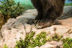 Когти медведя стоковые изображения