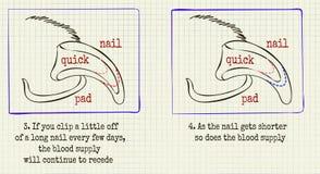 Когти холить животного иллюстрации вектора иллюстрация штока