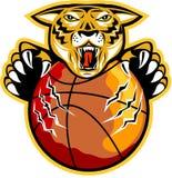Когти шарика баскетбола тигра Стоковое Изображение