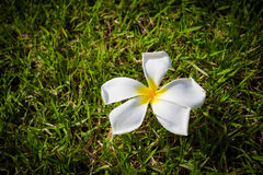 Когда падение красоты от неба в траву Стоковые Фото