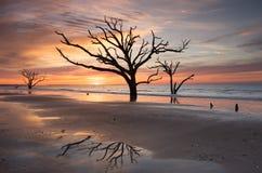 SC Edisto восхода солнца пляжа Чарльстона Boneyard стоковые фото