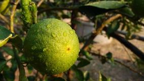 Когда я люблю удар вода, цвет лимона стоковые фотографии rf