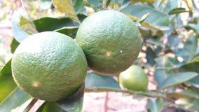 Когда я люблю удар вода, цвет лимона стоковые изображения rf