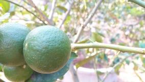 Когда я люблю удар вода, цвет лимона стоковое фото
