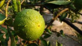 Когда я люблю удар вода, цвет лимона стоковые фото