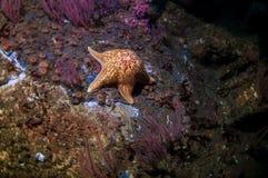 Кожаная звезда на развалине HMCS Юкона Стоковые Фото