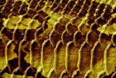 кожаная змейка Стоковая Фотография