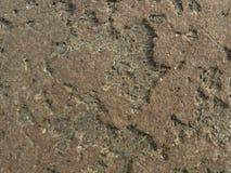кожаная старая текстура Стоковые Изображения