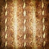 кожаная старая Стоковое Изображение RF