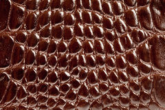 кожаная текстура змейки стоковые фотографии rf