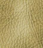 кожаная текстура Стоковые Изображения RF