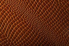 кожаный гад Стоковые Изображения RF