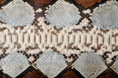 кожаный питон Стоковые Фотографии RF