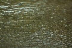 Кожа бегемота волосы очень мала стоковое фото rf