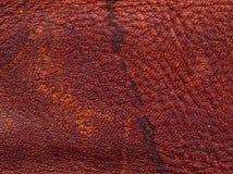 кожа безшовная текстура кожи tileable Макрос текстура Стоковые Изображения RF