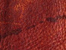 кожа безшовная текстура кожи tileable Макрос текстура Стоковое Изображение