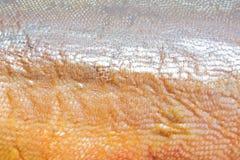 кожа выкружки salmon некоторые Стоковое фото RF