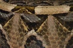 Кожа в реальном маштабе времени змейки Стоковые Фотографии RF