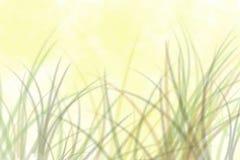 кожа гада игуаны Стоковое Изображение