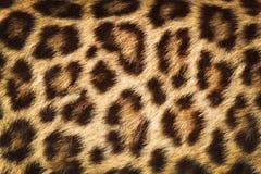 Кожа детали леопарда Стоковое Фото