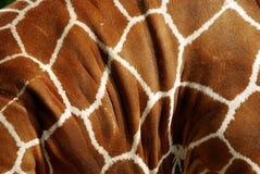 Кожа жирафа Стоковое фото RF