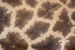 Кожа жирафа Стоковое Изображение