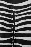 Кожа зебры стоковые изображения rf