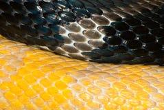 Кожа 2 змеек Стоковые Изображения RF