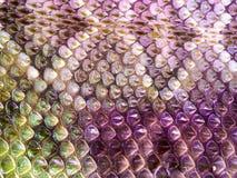 Кожа змейки вычисляет по маcштабу деталь Стоковые Фото