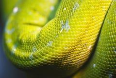 Кожа змейки, яркие масштабы Стоковые Изображения RF