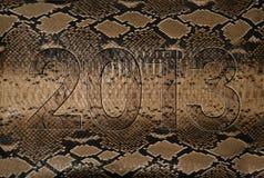 кожа змейки 2013 Стоковые Изображения RF