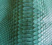 Кожа змейки Стоковое Изображение
