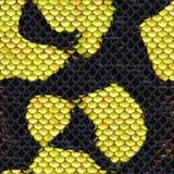 Кожа змейки стоковое изображение rf