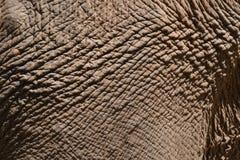 Кожа картины слонов Азии в Таиланде Стоковые Фото