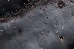 Кожа кита Humpback стоковые фотографии rf