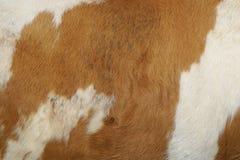 Кожа коровы Стоковое Изображение