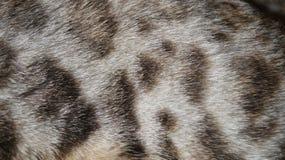 Кожа кота Стоковая Фотография