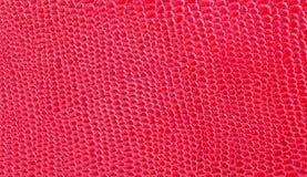 Кожа красна Стоковая Фотография RF