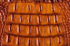 Кожа крокодила для изготовлять роскошных ботинок, одежд, ба Стоковые Изображения