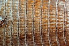 кожа крокодила стоковые фотографии rf