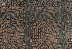 Кожа крокодила Стоковое фото RF