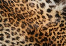 кожа леопарда Стоковая Фотография
