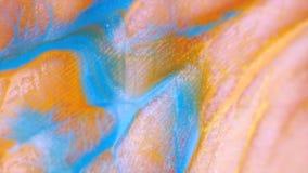 Кожа макроса, согласно створкам чего пропуская краска стоковые фотографии rf