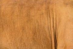 Кожа меха коровы Стоковое Изображение
