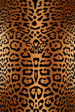 кожа печати леопарда Стоковые Фото
