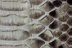 кожа питона Стоковые Фотографии RF