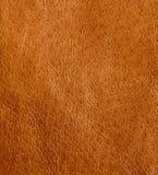 кожа предпосылки стоковое изображение