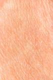 кожа предпосылки стоковые изображения