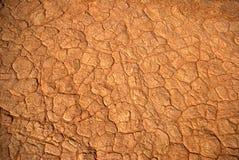 кожа пустыни Стоковые Изображения RF